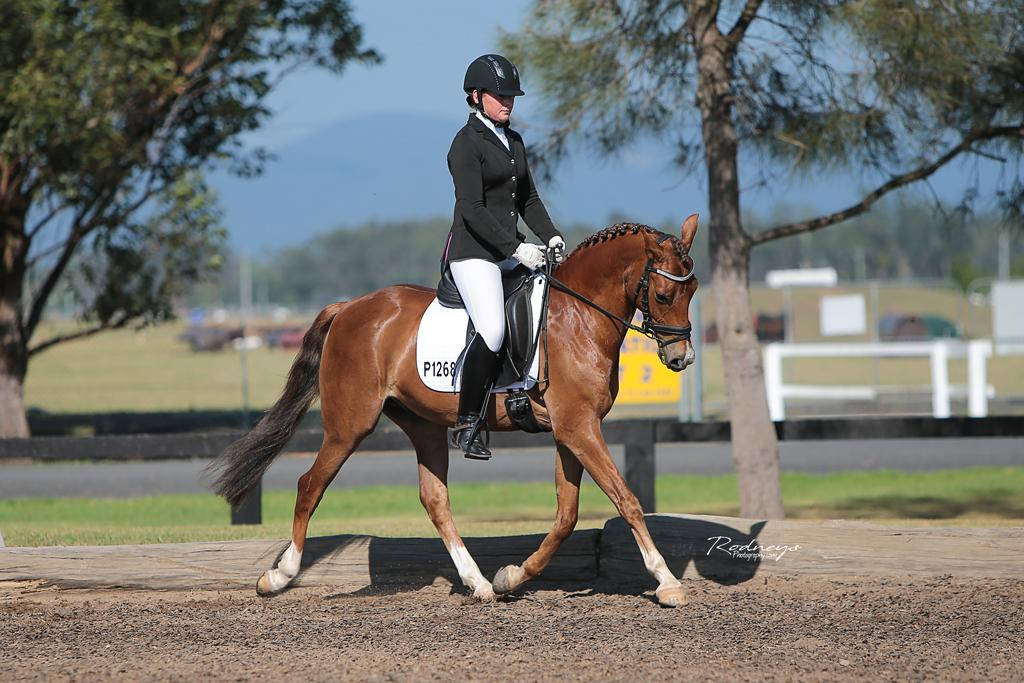 Outstanding Dressage German Riding Pony