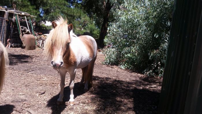 quiet natured mare