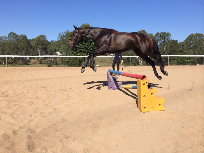 TALENTED YOUNG STOCKHORSE