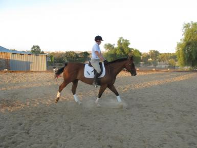 Make excellent first young horse project