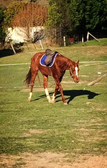 First time under saddle.