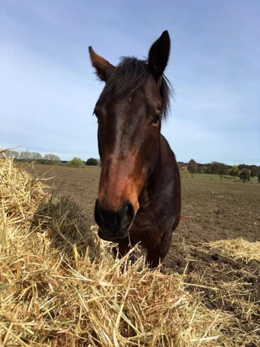 Big moving gelding by Lonhro