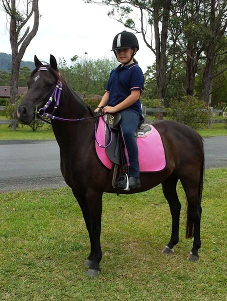 Black Australian Riding Pony mare 12.2hh 8 yr old
