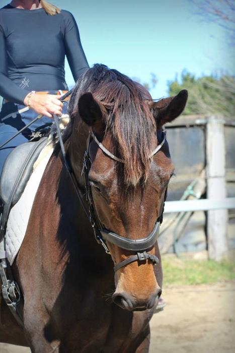 Elementary Mare for Sale!