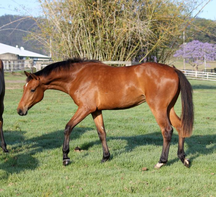 Superb jumping bred filly - Christian x Clearway