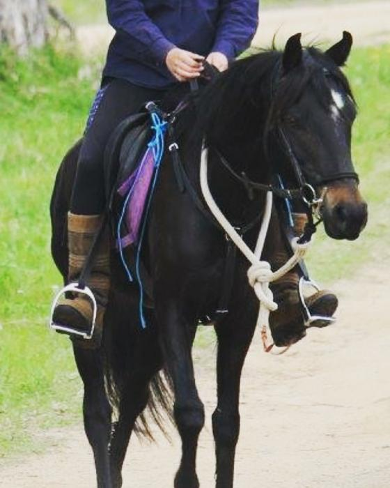 """Felix"" Aus Riding Pony Gelding Approx. 6yo-12.3h"