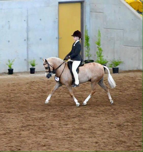 Oustanding Hunter Pony