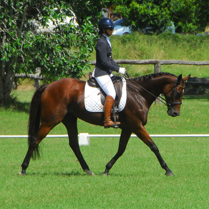 Red Rebel Angel - 9yr all-rounder Mare