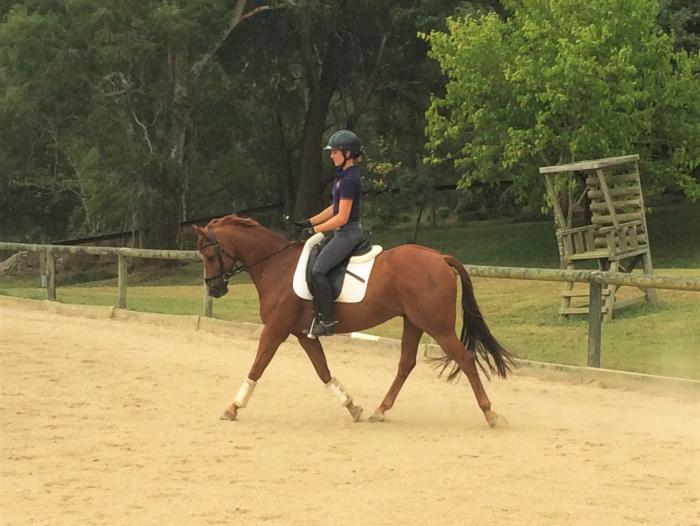 Flash Chestnut Pony Gelding for Sale