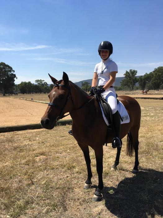 Lovely Australian Riding Pony Mare