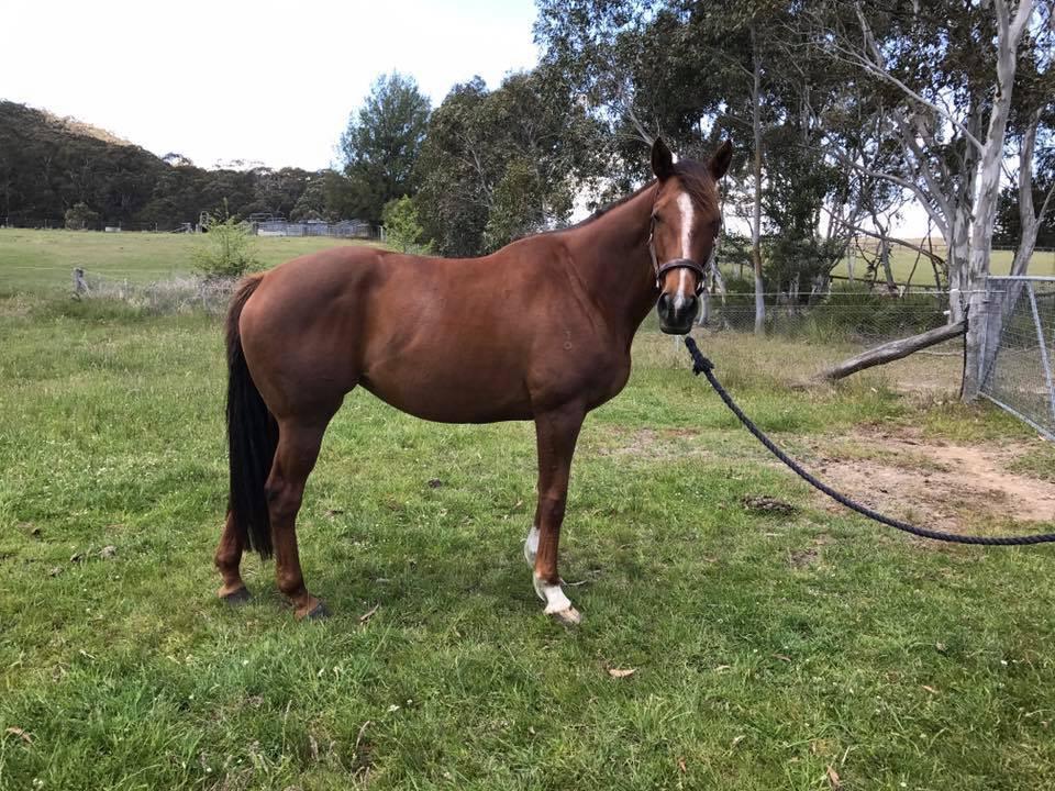 Pretty OTT mare