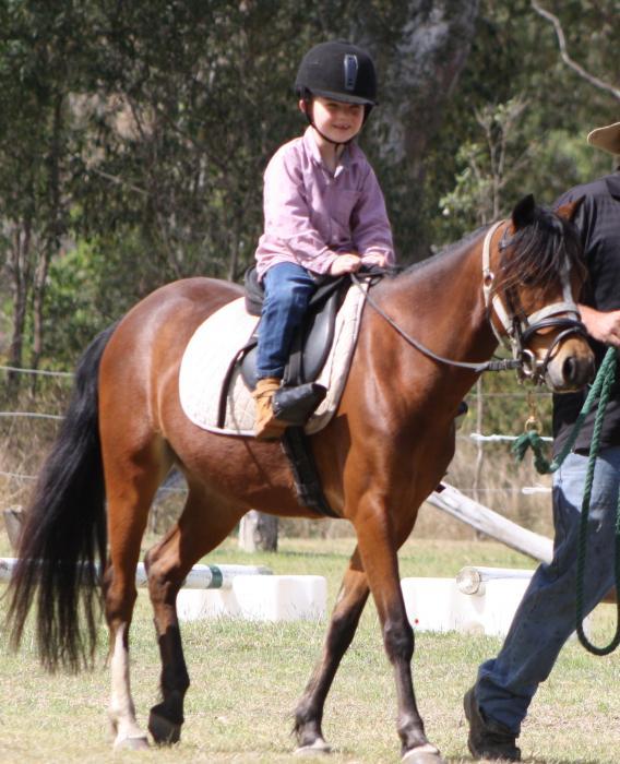 Australian Pony Mare