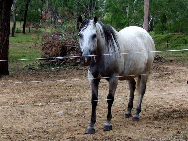 Dancing Lou in Foal 2011