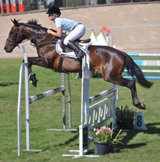 Athletic Showjumping Showjump Mare