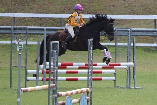 competitive pony club mount