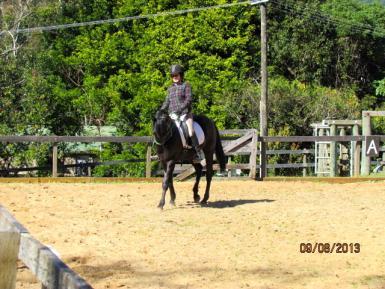 Under saddle & Halter @ 18 mths old,