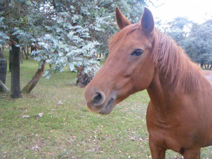 Amazing Pony Club Pony / Galloway