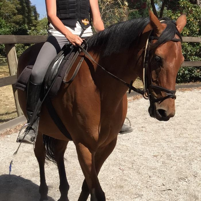 Agile and willing Gelding