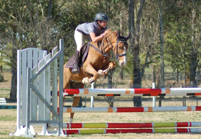Great Performance  Pony