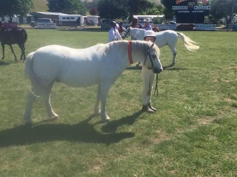 Alround Beginners Pony