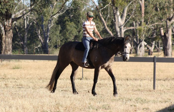 Stunning Young Gelding