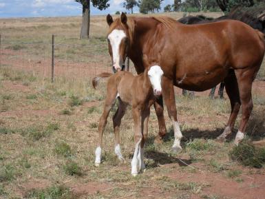 2012 (2nd foal)