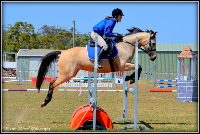 Super Show Jumper and Allrounder