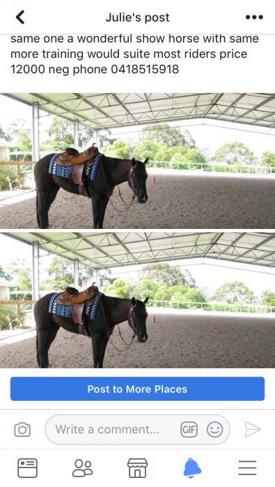 black gelding resonable offers considered