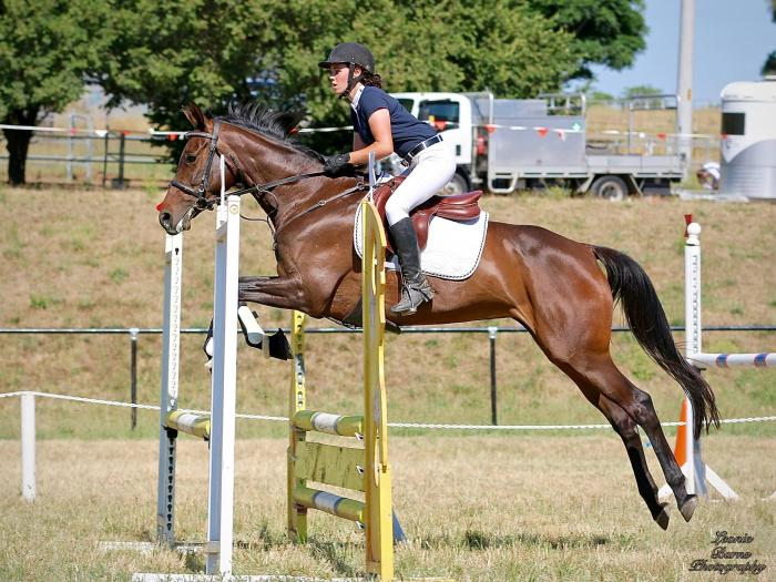 Lovely mare with unlimited potential
