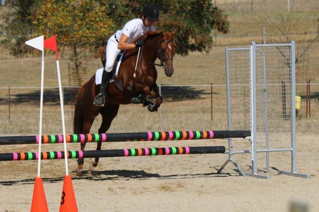 Excellent second pony