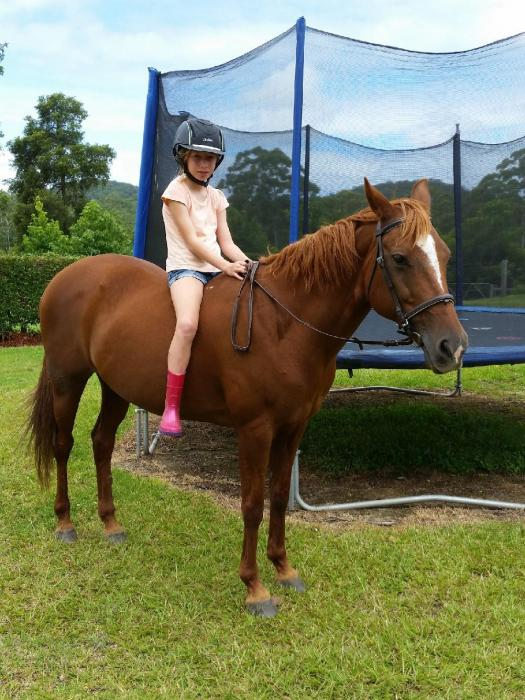 Belle 14.1hh Riding Pony X Quarter horse
