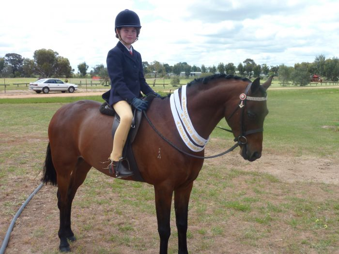 Karlana Classic Edition 13.1hh Riding Pony x Welsh