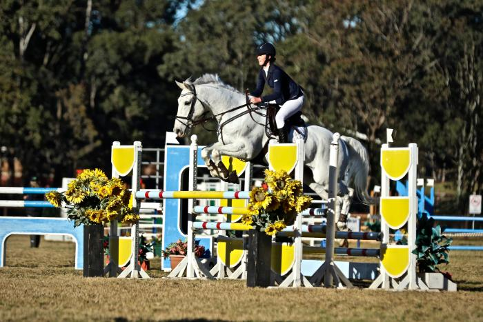 Ultimate Juniors / Amateur Showjumping Gelding
