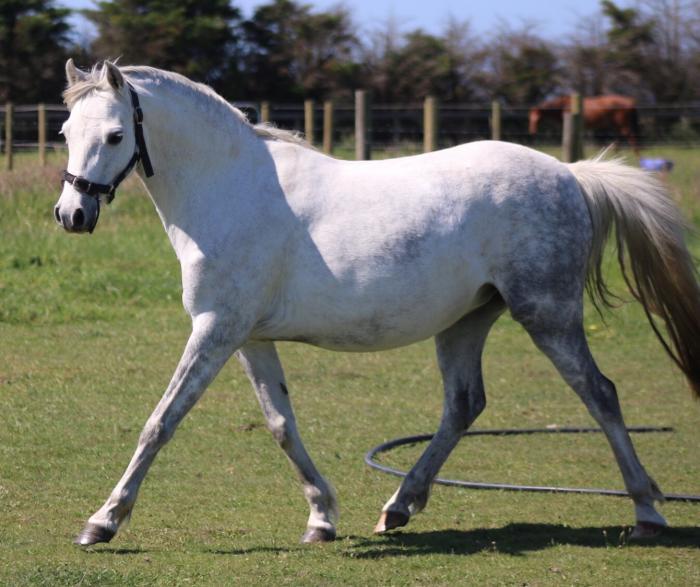 Gorgeous pony mare