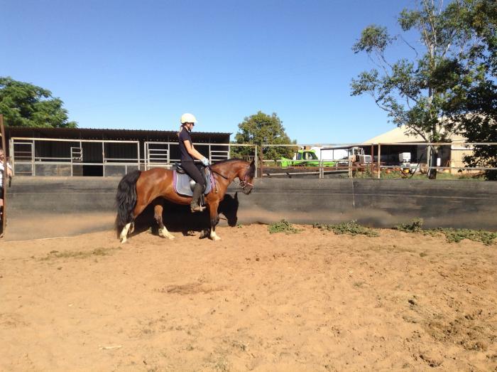 Eye catching welsh pony