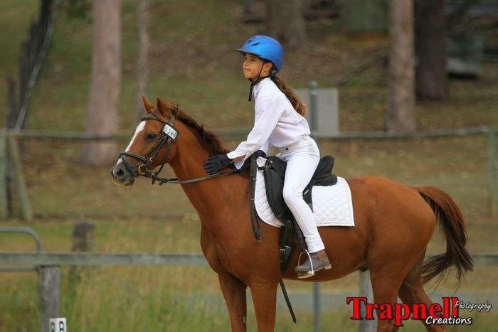 Marty - Fun and experienced Riding Pony
