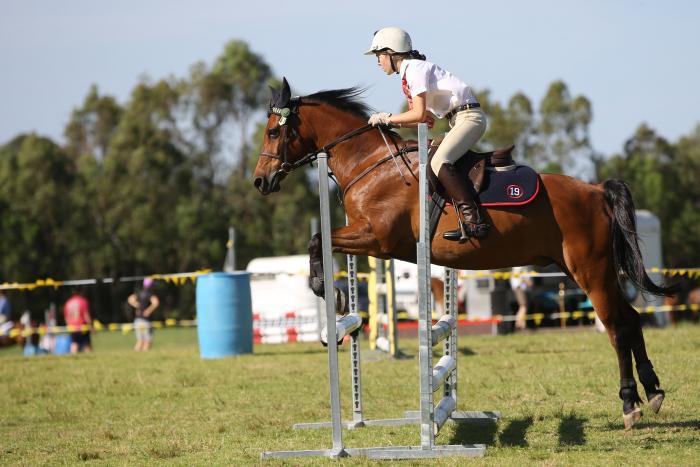 Perfect Allrounder/Pony Club Pony