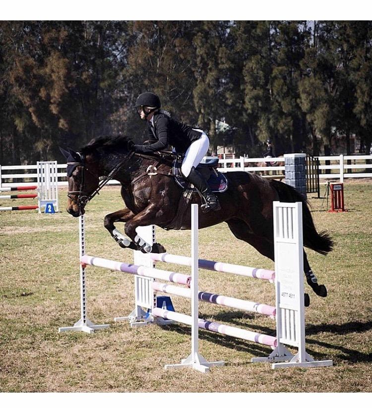 Talented showjumping gelding