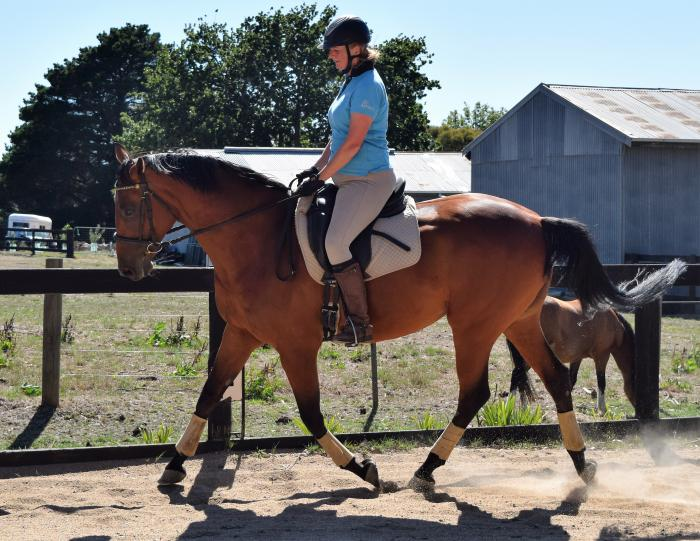 Talented, sound & sensible warmblood mare