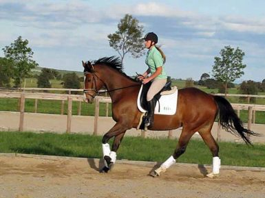 Dressage at the Equestrian Centre