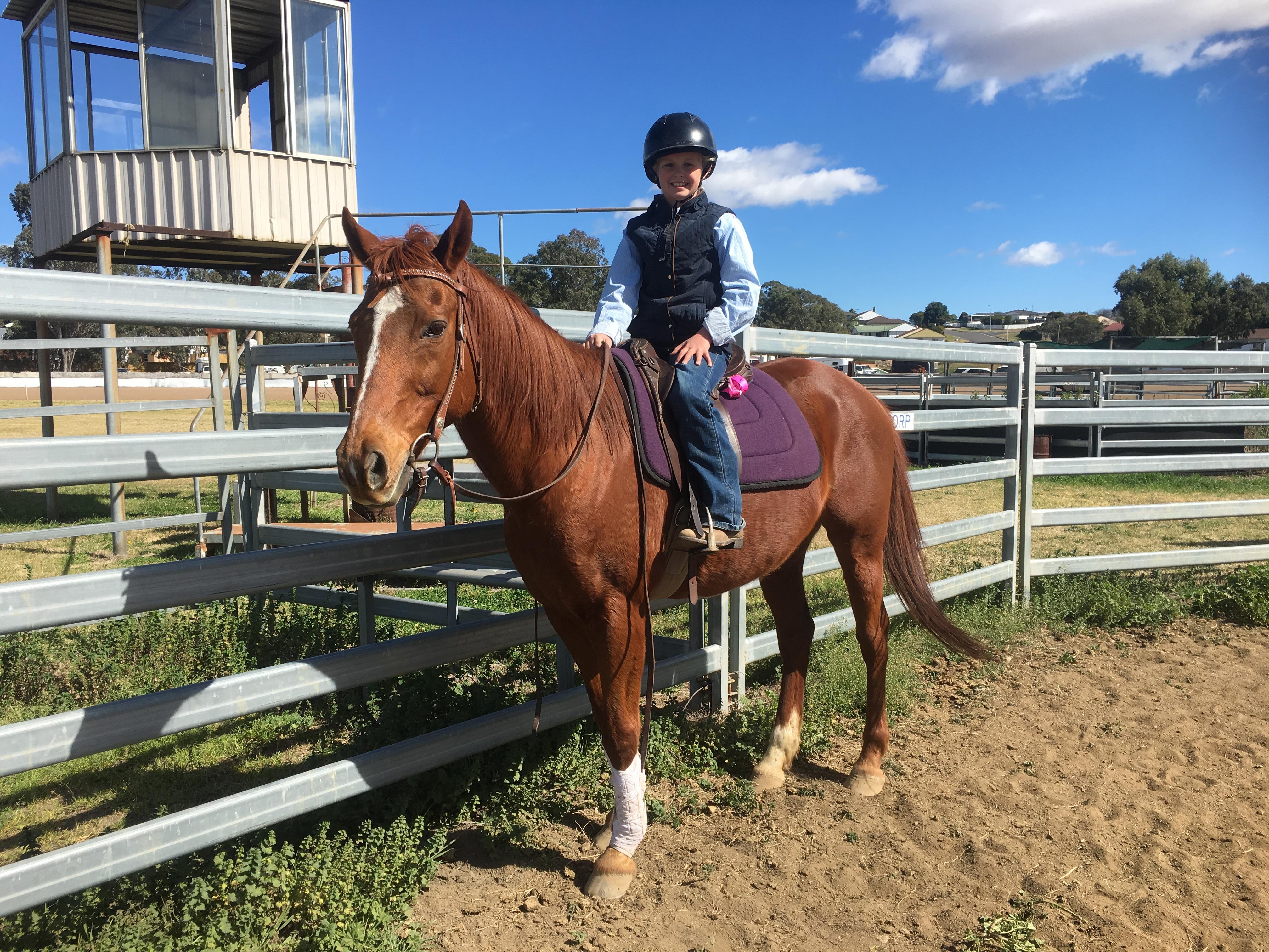 Nice stockhorse