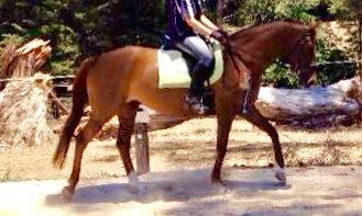 safe, fun, stylish looking mare - Breezy