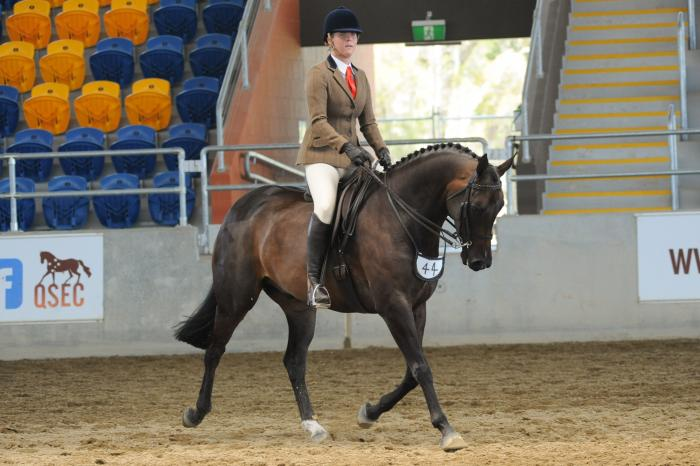 Small Warmblood - Dressage & Show - Imported Lines