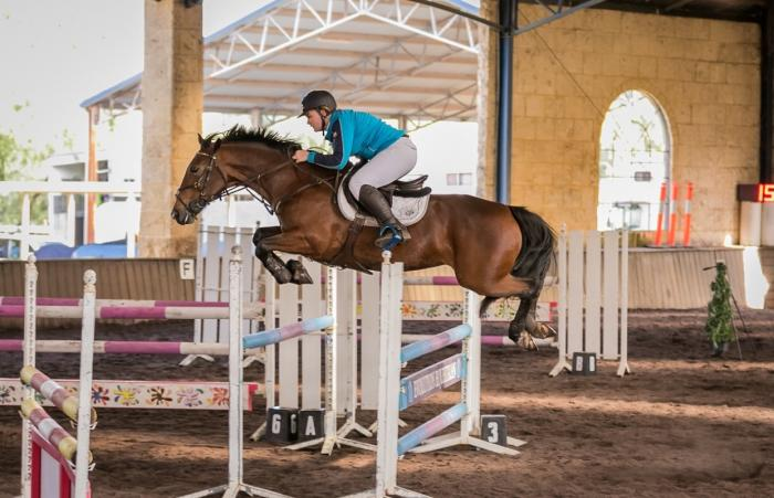 Super competitive show jumping horse