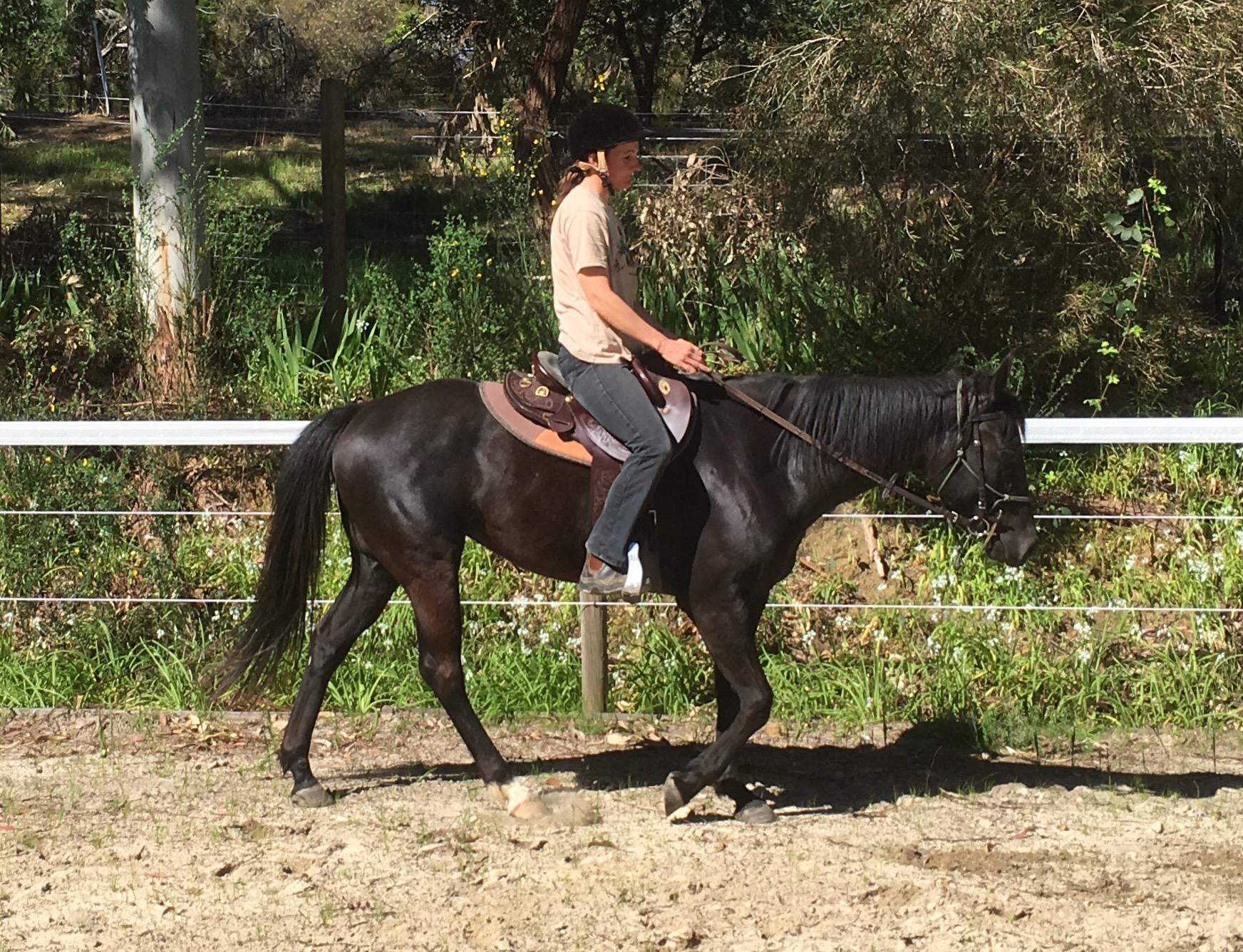 Black QH mare Q-75138