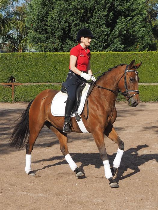 Superstar potential for Competitive rider