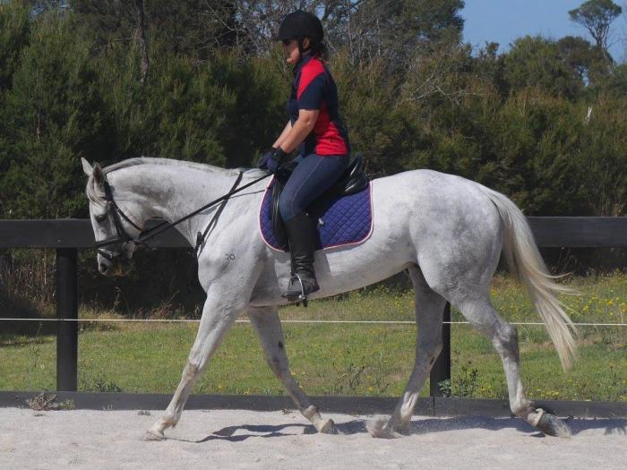 Gorgeous Grey Foundation Mare
