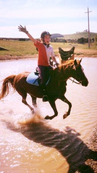Brilliant Pony