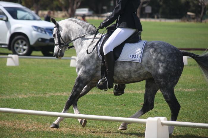 Stunning competitive pony with gear