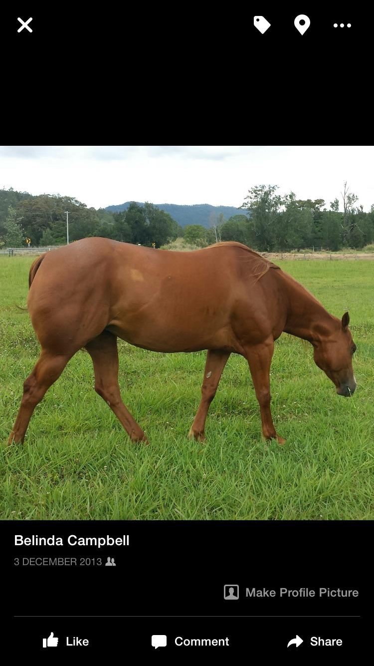 Quality broodmare REDUCED!!!!